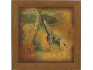 Schilderij Safari Giraffe Giraffes Giraffen
