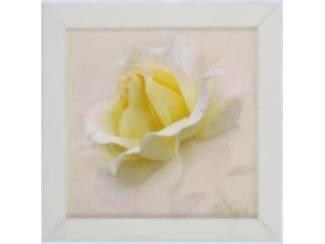 Schilderij Bloemen Magnolia, Gele Roos, Lavendel Tweeluik