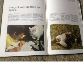 Een Boek van katten,lieve schattige huisdieren,slimme dieren