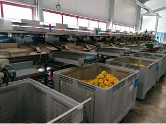 Tuinbouw Aweta gmc 4-16 paprika sorteerlijn incl. palletiseerder en binder