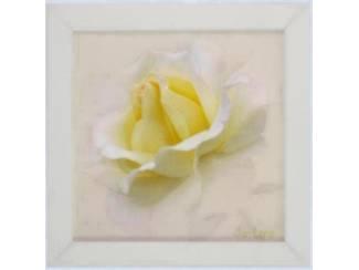 Tweeluik Schilderij Bloemen Magnolia, Gele Roos, Lavendel