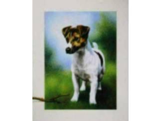 Poster Jack Russel Hond Russell Honden (AV)
