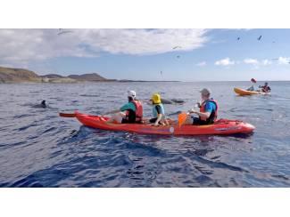 Roeien met dolfijnen in Tenerife