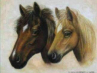 Posters Verschillende Paarden