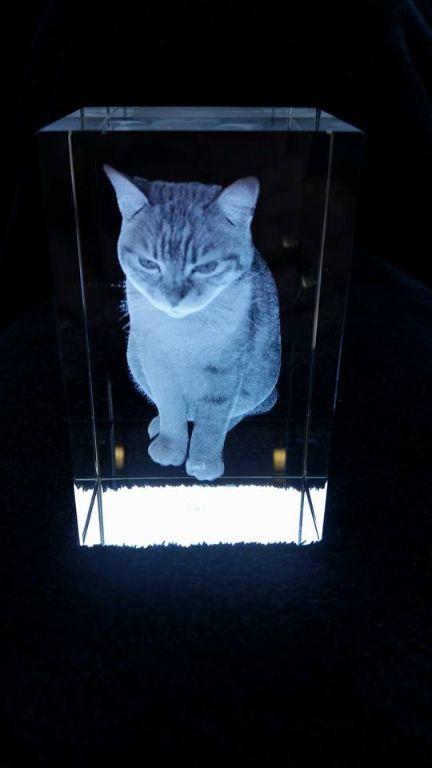 De mooiste foto van uw kat in 3D (driedimensionaal) !
