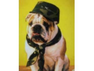 Posters Honden oa Buldog, Border Collie en Boxer