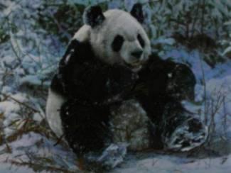 Posters Verschillende Wilde Dieren oa Panda beer