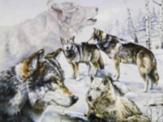 Poster Roedel Wolven in de Sneeuw