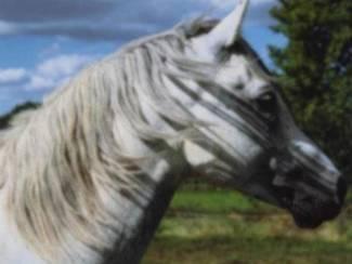 Paarden Posters Paard (B)