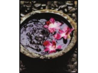 Posters Mylar , hotstone, orchidee en bloem in pot