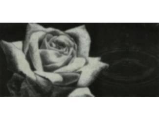 Glossy Schilderij Roos met Regendruppel Rozen Bloem Bloemen
