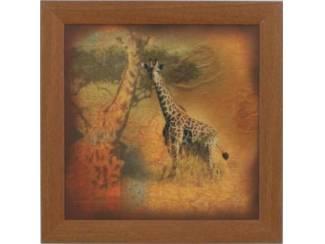 Safari Schilderij Giraffe Giraffes Giraffen
