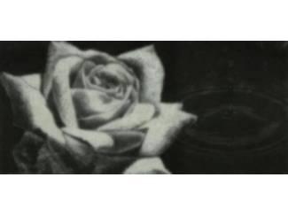 Schilderij Roos met Regendruppel Rozen Bloem Bloemen Glossy