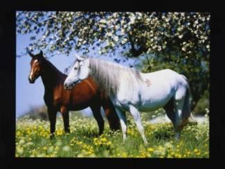 Paarden Posters Paard met Tulp, Bloem, Strand, Zee