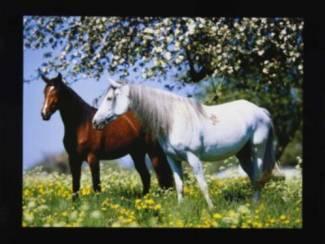 Posters Paarden Paard met Tulp, Bloem, Strand, Zee