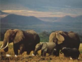 Posters Olifanten en Zebra's