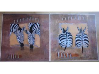 POSTERS ZEBRA SERIE 2 DLG 60 x 60 cm NIEUW