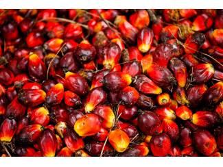 Palmolie, zonnebloemolie en anderen