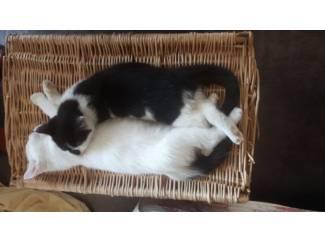 Katten | Toebehoren LiefKroelKatertje