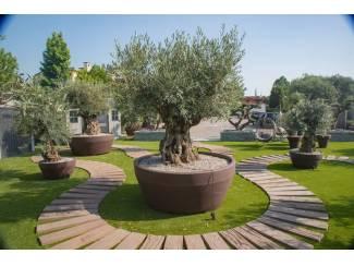 Prachtige grote bloembakken geschikt voor olijfboom of palmboom