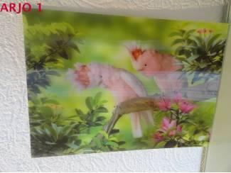 Drie D poster -Papegaaien nr 131 - GEEN VERZENDKOSTEN