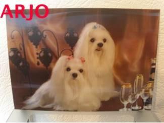 Drie D poster - Honden - nr 59 - GEEN VERZENDKOSTEN