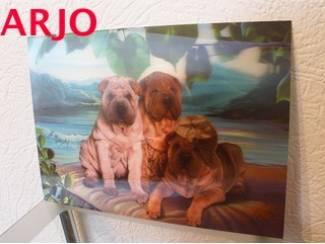 Drie D poster - Honden  nr 61 - GEEN VERZENDKOSTEN