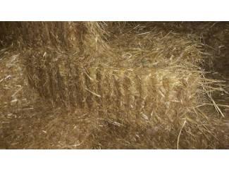 Paarden | Toebehoren Tarwe stro in kleine pakken oogst 2019.