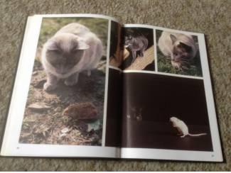 De wondere wereld van de katten ,lieve schattige huisdieren