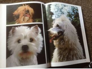 Een Boek van honden ,lieve aangename huisdieren,