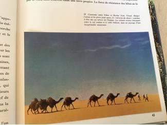 Overige Afrika,Het oerwoud,woestijn,steppe,een enorme vegetatie,de ruïne